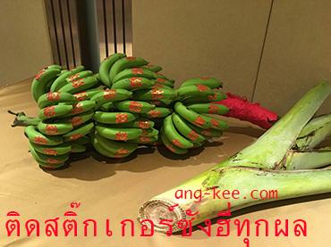 กล้วยเครือติดซังฮี่ทุกผลสำหรับพิธีหมั้นแบบจีนยกน้ำชา