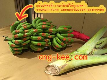 กล้วยหอมเครือ ใช้ในพิธีหมั้น ขันหมากจีนของฝ่ายหญิง ติดสติ๊กเกอร์ซังฮี่สวยงามทุกผล ติดกระดาษแดง เชือกแดง มีโค้งมังกร ถูกหลักตามประเพณีจีน มีบริการส่งค่ะ